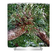 Stag Horn Fern 11 Shower Curtain