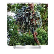 Stag Horn Fern 9 Shower Curtain