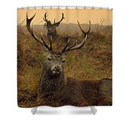 Williams Fine Art Stag Party The Series  Shower Curtain