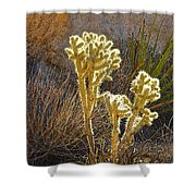 Staghorn Cholla Cactus Catching Sunlight In Joshua Tree Np-ca Shower Curtain