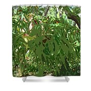 Staghorn Cutout Shower Curtain