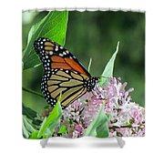 Marvelous Monarch Shower Curtain