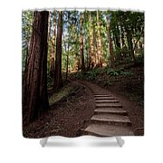 Stairs Into The Woods Shower Curtain