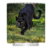 Stalking Leopard Shower Curtain