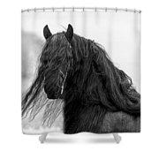 Stallion Beauty Shower Curtain