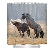 Stallion Challenge Shower Curtain