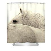Stallion In Sepia Shower Curtain