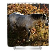 Stallion Of The Badlands Shower Curtain