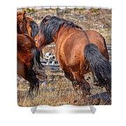 Stallions Gone Crazy Shower Curtain