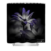 Stand Alone Shower Curtain