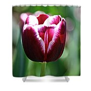 Stand And Shout Shower Curtain