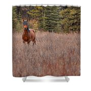 Stand Free Shower Curtain