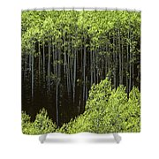 Stand Of Birch Trees New Growth Spring Rich Green Leaves Shower Curtain