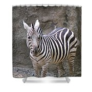 Standalone Zebra Shower Curtain