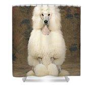 Standard Poodle Dog Shower Curtain