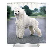 Standard Poodle Dog, Unclipped Shower Curtain