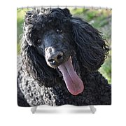 Standard Poodle Shower Curtain