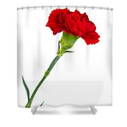 Standing Carnation Shower Curtain