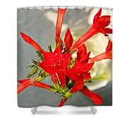 Standing Cypress Bouquet  Shower Curtain