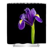 Standing Iris Shower Curtain