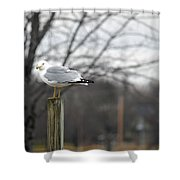 Standing Seagull Shower Curtain