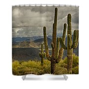 Standing Tall In The Sonoran Desert  Shower Curtain