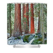 Standing Tall - Sequoia National Park Shower Curtain