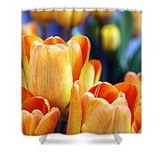 Standing Tall Tulips Shower Curtain