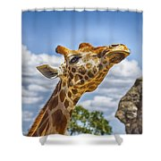 Standing Tall V3 Shower Curtain