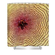 Stapelia Grandiflora - Close Up Shower Curtain