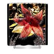 Stapelia Grandiflora Starfish Cactus Shower Curtain