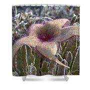 Stapelia Hirsuta Flower-oahu Hawaii Shower Curtain