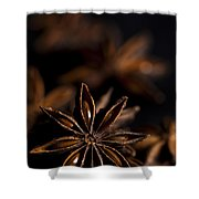 Star Anise Study Shower Curtain