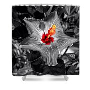 Star Bright Hibiscus Selective Coloring Digital Art Shower Curtain