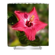 Star Bright Hibiscus Shower Curtain
