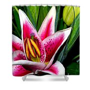 Star Gazer Lily Shower Curtain