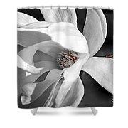 Star Magnolia Flower Shower Curtain