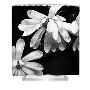 Star Magnolia In Black And White Shower Curtain