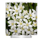 Star Of Bethlehem Shower Curtain