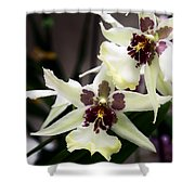 Star Orchids Shower Curtain