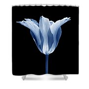 Star Tulip Flower In Blue Shower Curtain
