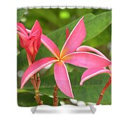 Starburst Plumeria Shower Curtain