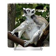 Lemur Stare Shower Curtain