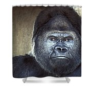 Stare-down - Gorilla Style Shower Curtain