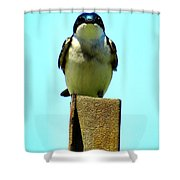 1 Swallow Never Makes A Summer Shower Curtain