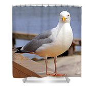 Stare Of A Seagull Shower Curtain