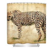 Stare Of The Cheetah Shower Curtain