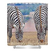 Stares And Stripes Shower Curtain