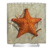 Starfish 1 Of Bottom Harbour Sound Shower Curtain
