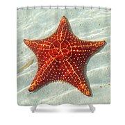 Starfish 3 Of Bottom Harbour Sound Shower Curtain
